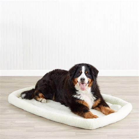 best large dog beds the best large dog beds for your large breed dogs dog beds