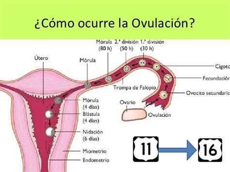 que es inductor de la ovulacion que es inductor de la ovulacion 28 images tabla d 237 as f 233 rtiles y c 225 lculo de la