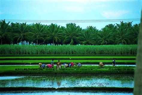 L India by L Agricoltura Settore Strategico Nell Economia Dell India