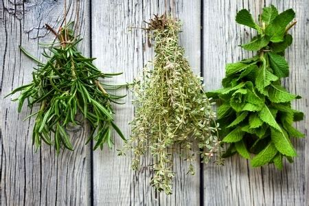 growing  storing herbs  winter doityourselfcom