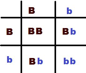 punnett square for eye color mathematical monday family genetics are geeks