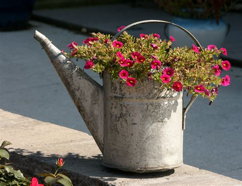 foto di fiori da scaricare gratis foto da scaricare gratis di fiori wallpapers