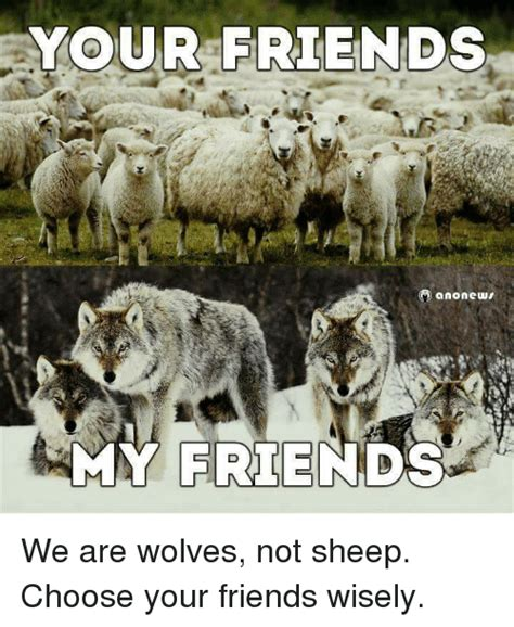 Madonna Is Not A Friend To The Sheep by Wolves Memes Of 2016 On Sizzle Dank
