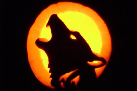 pumpkin wolf carving wolf pumpkin carving  storms