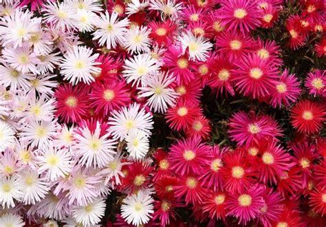 catalogo fiori da giardino succulente in giardino piante grasse succulente in
