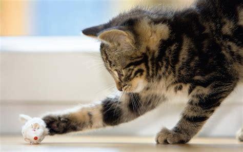 cat games ways    feline friend entertained