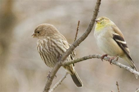 winter birds in new york movie search engine at search com