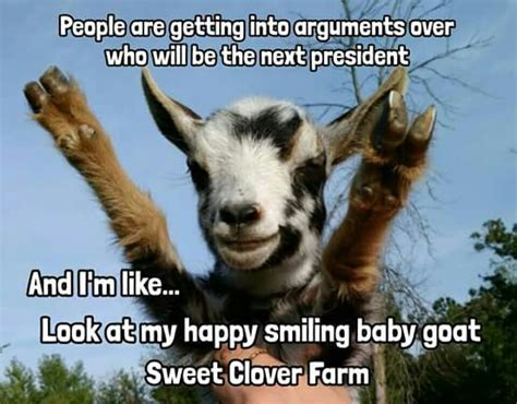 Happy Goat Meme - babygoatfarm goatmemes goat ing around pinterest