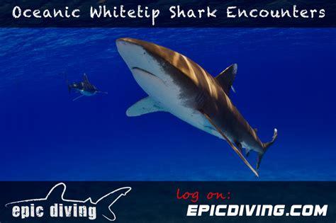 epic dive boats diving cat island bahamas epic diving