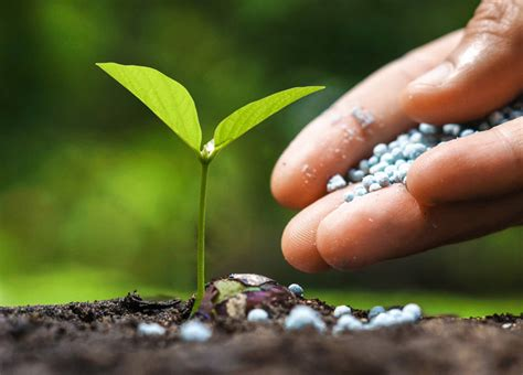 How To Make Your Vegetable Garden Fertilizer Loyalgardener How To Fertilize Vegetable Garden