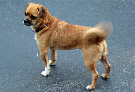 do dogs bones in their tails why do dogs wag their tails humans loving animals