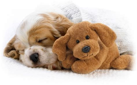 puppy screensavers puppy wallpapers and screensavers wallpapersafari
