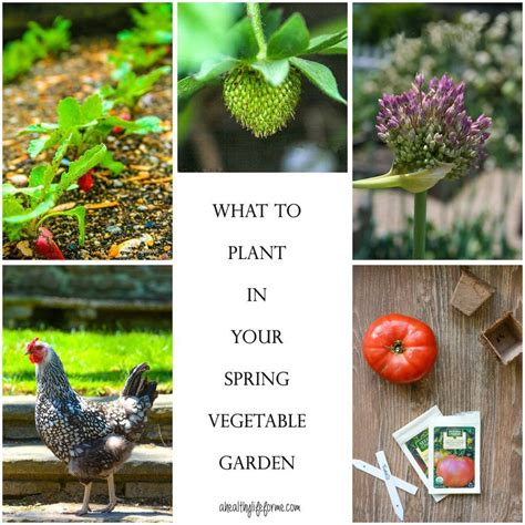 planting your vegetable garden a healthy for me