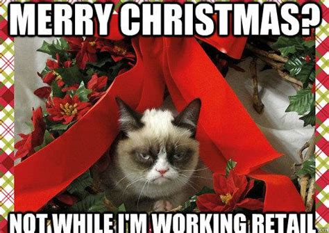 Merry Christmas Cat Meme - 152 best images about laugh and misc on pinterest