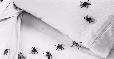 how to keep spiders out of your bed 7 ways to keep spiders out of your bed