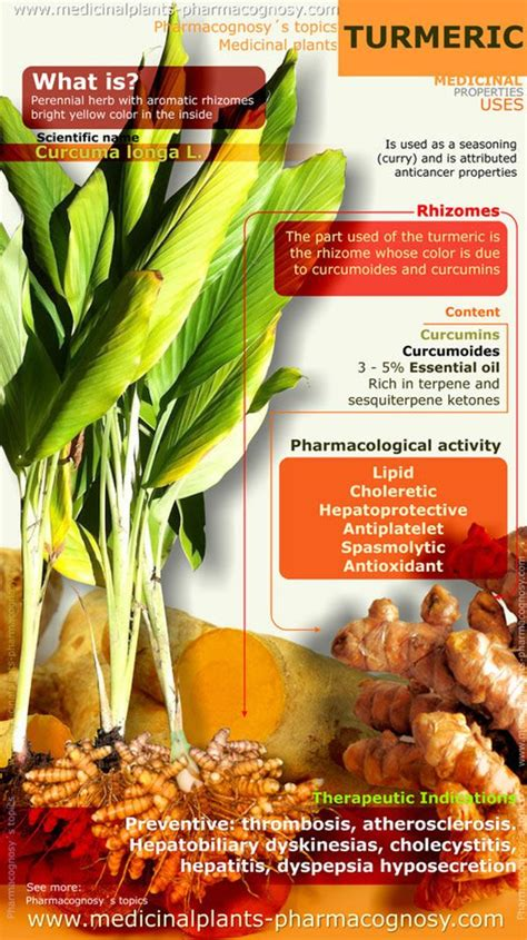 Turmeric Medicinal Uses by Turmeric Benefits Infographic Food Information