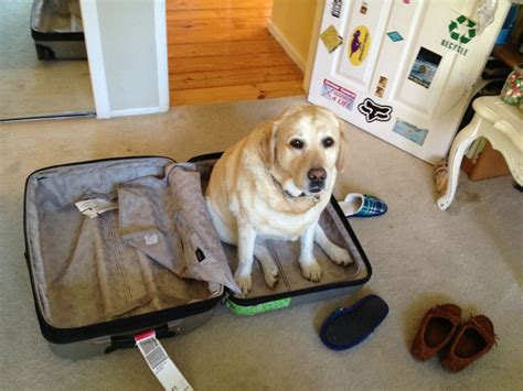 puppy suitcase 15 things that happen when you are a pup parent in your 30s