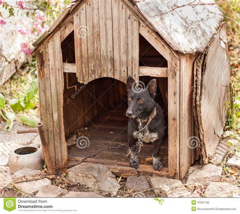 black dog house black dog in wooden house stock photo image 47561192