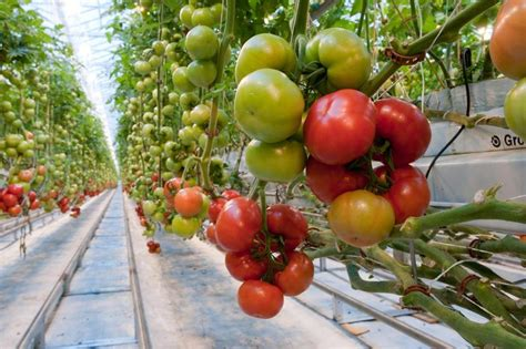 backyard farms tomatoes fidelity s johnson takes a heavy loss in his pursuit of