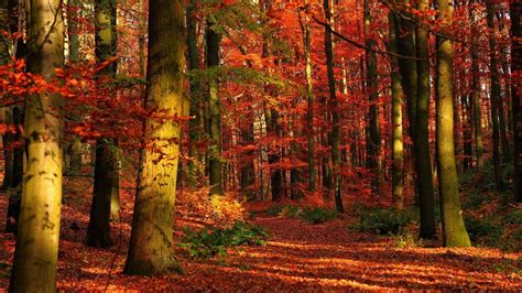 hike themes hd 1920x1080 fall wallpapers wallpaper cave