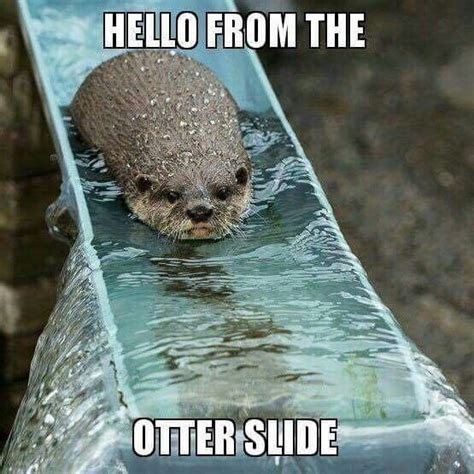 Funny Otter Meme - 17 best images about corny memes on pinterest valentines