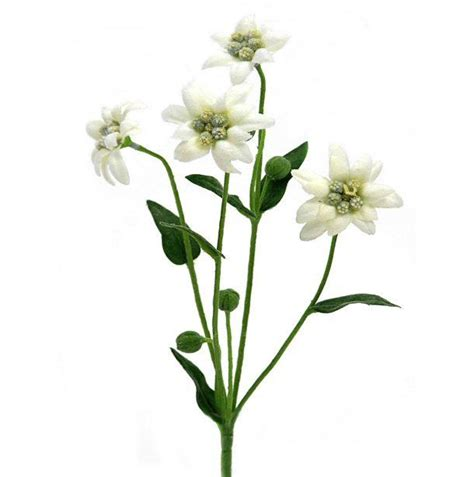 decorative flowers 30cm artificial edelweiss flower spray plant