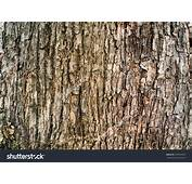 Download Tree Bark Wallpaper Gallery