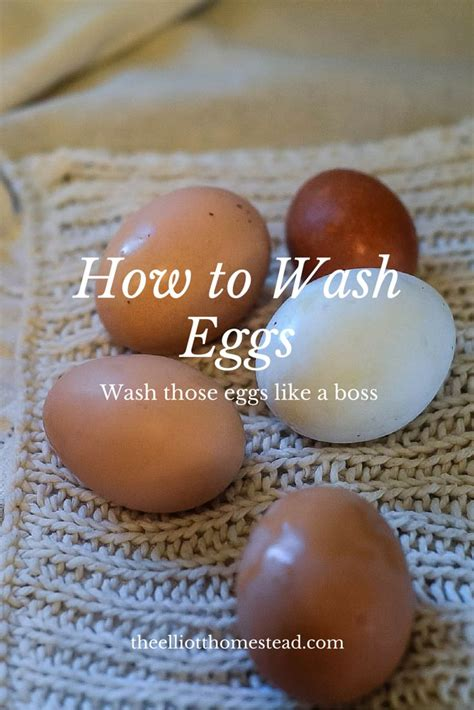 how can eggs sit out at room temperature 25 best ideas about chicken roost on chicken coops chicken coop run and chicken