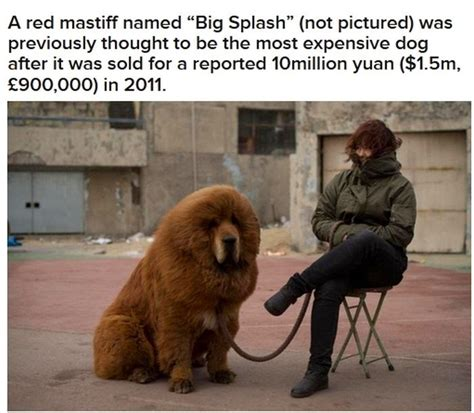 most expensive puppies world s most expensive damn cool pictures