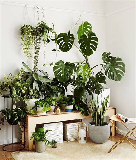 beautiful plant filled table  images indoor