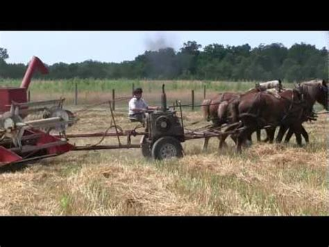amish plowing with a seven hitch amish farming with antique plow and belgian horses
