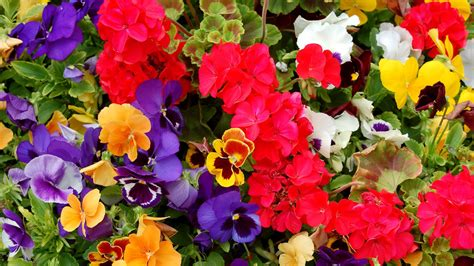 colorful wallpapers of flowers colorful flowers wallpaper 1205396
