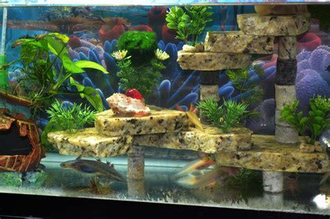 axolotl aquarium google zoeken aquascaping pinterest