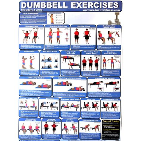 dumbell workout poster for chest and shoulders wall poster
