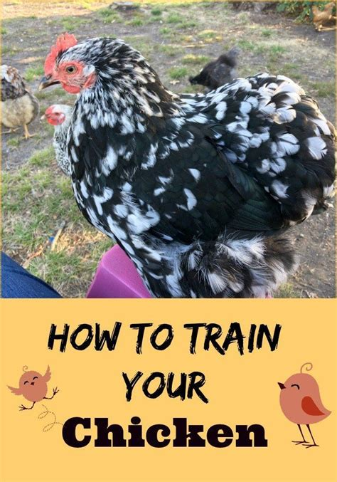 1000 Images About Backyard Chickens On Pinterest How To Raise Backyard Chickens For Eggs