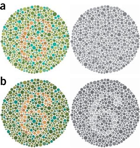color vision test ishihara color vision test plate points of view color