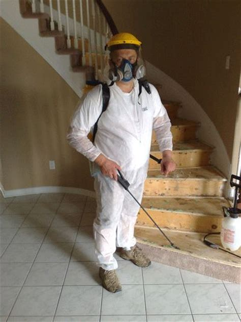 Hometalk   How to Get Rid of Black Mold