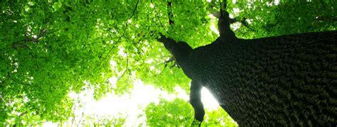 imagenes deareas verdes 193 rea verde 191 qu 233 son y que las componen parques alegres