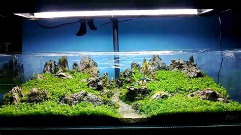 aquascape nz ada 60f new scape dry start method planted tank youtube