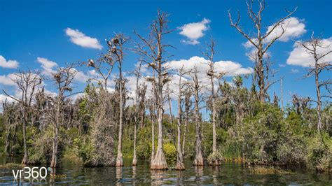 butler chain of lakes boat rs butler chain of lakes boat tour with orlando lake tours
