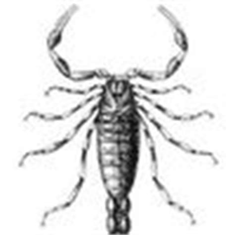 house of scorpion summary the house of the scorpion symbolism imagery allegory