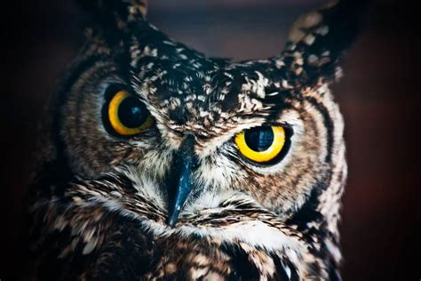 night owls night owls run higher risk of health problems safebee