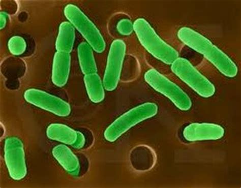 archaea creatures great and small