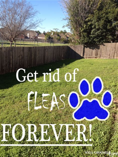 how to get rid of fleas naturally forever well groomed home