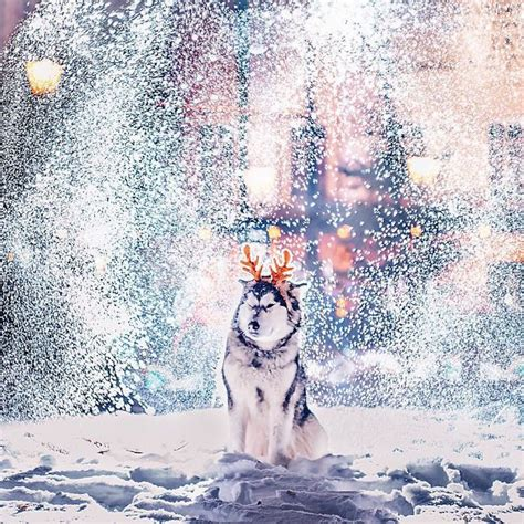 kristina makeeva christmas lights and snow turn moscow into a winter wonderland