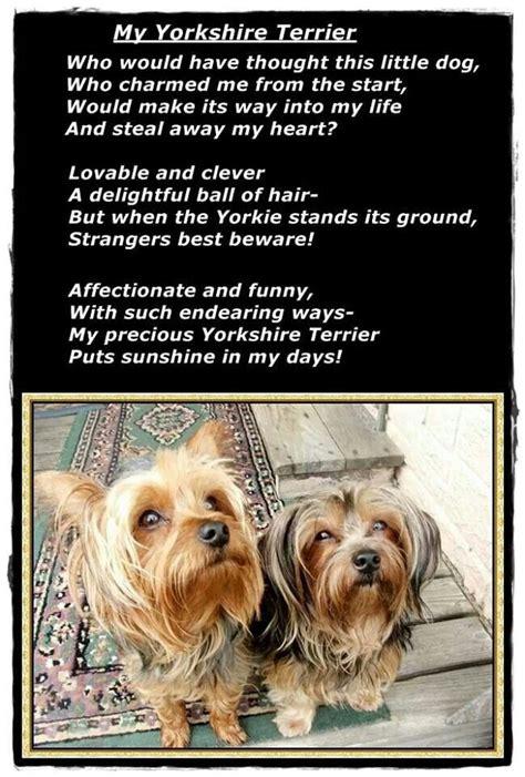 yorkie rescue milwaukee yorkie poems breeds picture