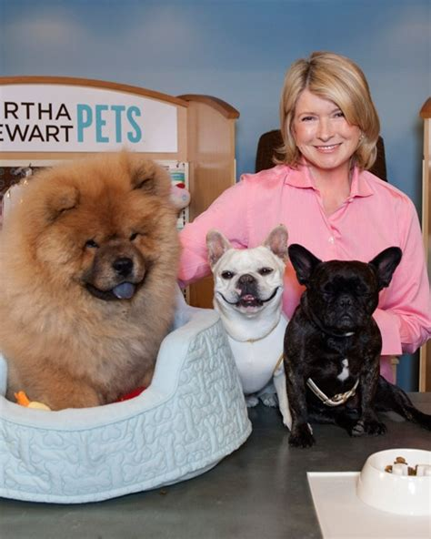 stewarts dogs pets
