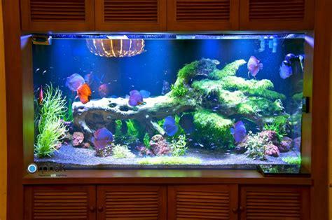what kind of light for aquarium plants planted freshwater aquarium lighting orphek