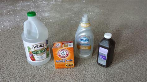 how do you get rid of dog smell in house cat urine on carpet how to remove smell meze blog