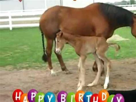 Happy Birthday Horse Meme